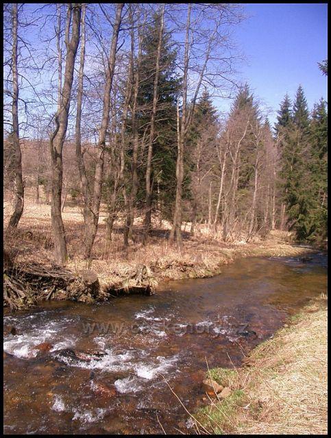 potok Černá voda