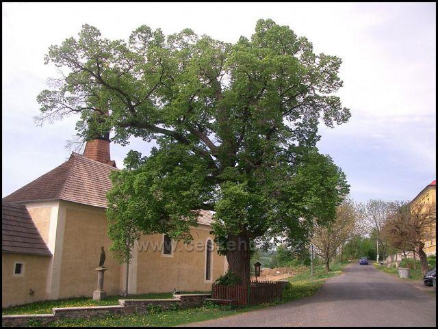 kostel Úhošťany a památný strom