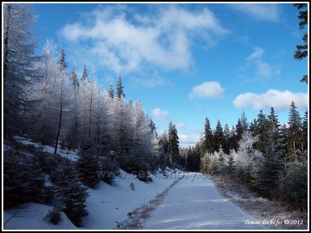 Šumava - pod vrcholem Boubín 1362 m.n.m