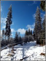 Šumava - vrchol Boubín 1362 m.n.m.