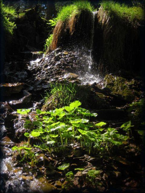 v Bukačce v Orlických horách