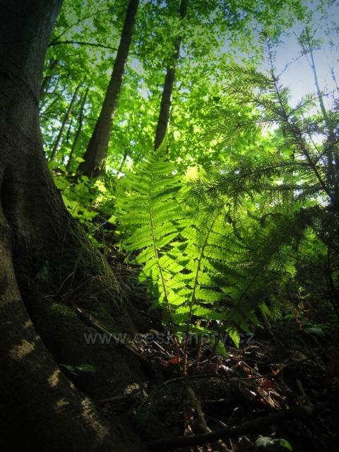 příroda na zřícenině
