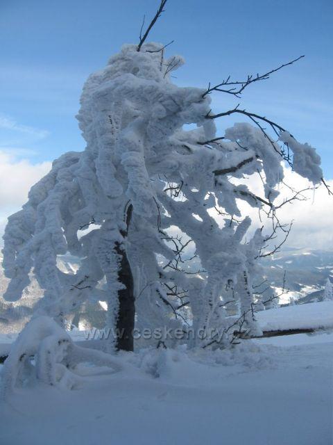 strom na Lysé hoře