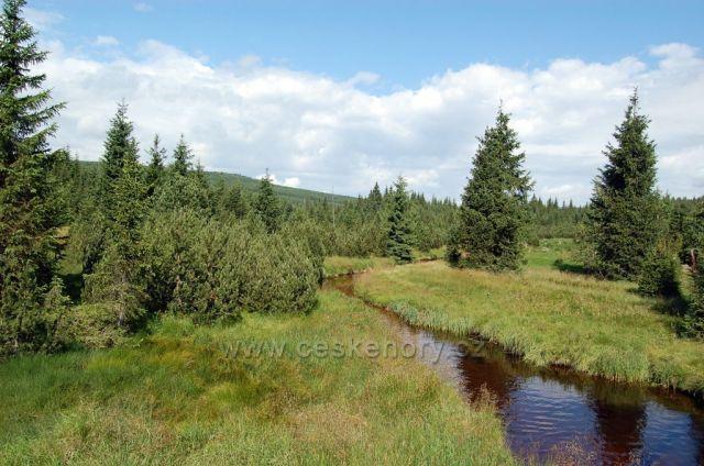 rašeliniště jizerky