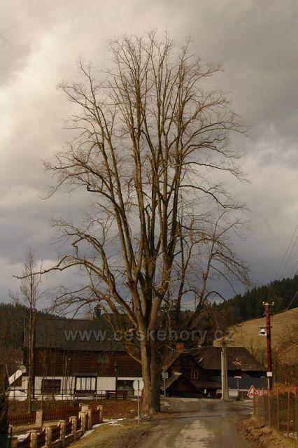 Strom ve Velkých Karlovicích.