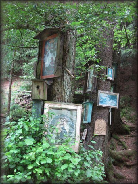 výletní místo-Skalákova studánka