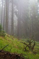 Mlha pod Boubínem