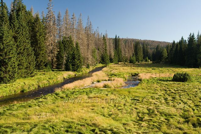 Soutok Roklanského a Javořího potoka