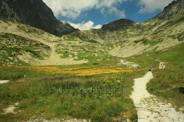 Kvetnica cestou na Polský hřeben