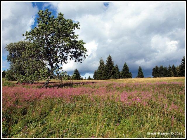 Šumava - Zhůří u Horské Kvildy