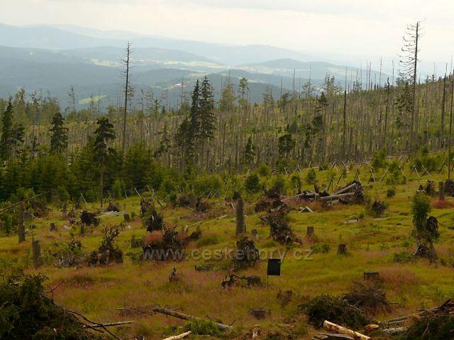 Šumavské lesy poblíž bývalé vsi Bučina