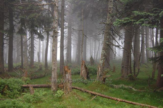 """Les v mlze na turistické trase """"Cesta česko-polského přátelství"""""""