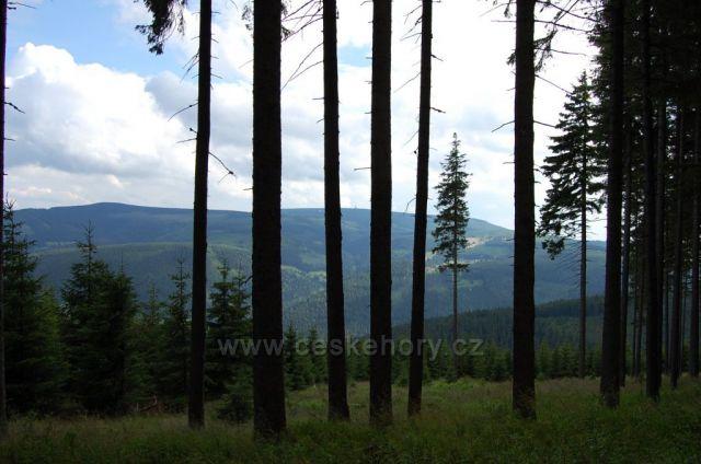 Ještěď v dáli mezi stromy