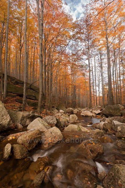 Barvy podzimu na Černém potoce