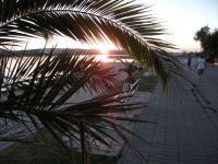 posezení pod palmami