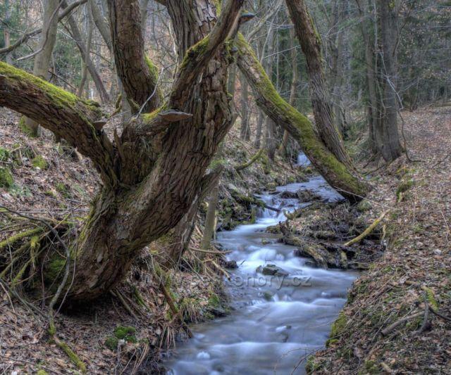 Třebíšský potok