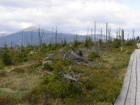 černohorská rašeliniště 22.5.2011