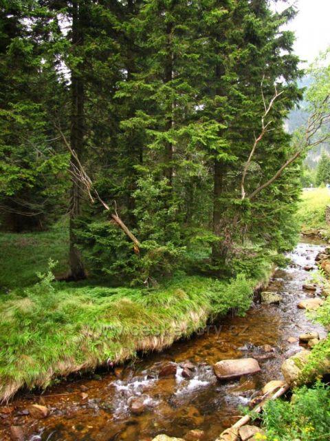potok v Obří důl