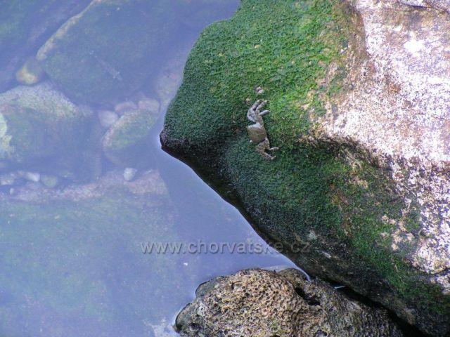 Natur 03 - Baška Voda