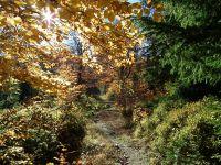 Podzimní vyplaz na Travný -1203m.n.m.