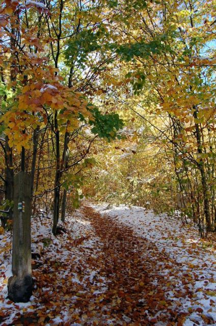 Podzim v Lidových sadech v Liberci
