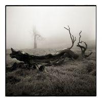 Krásný solitérní strom, který padnul v roce 2008 blízko silnice Nové Město-Fláje.