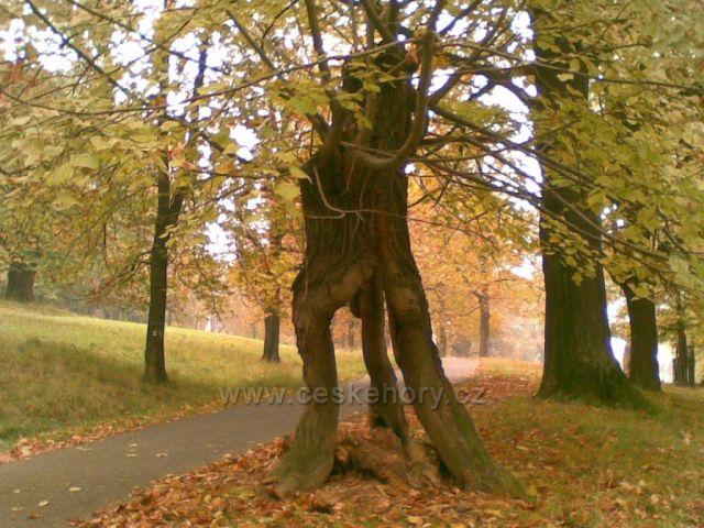 stromy na Hukvaldech
