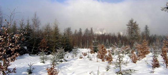 Zima pod Luží