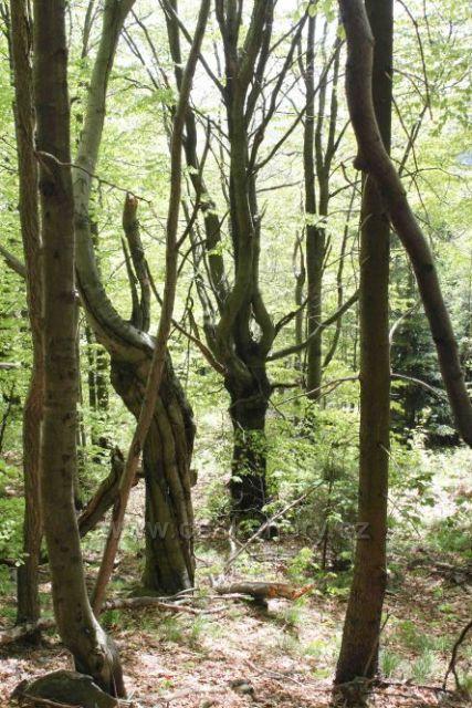 Les na Luži