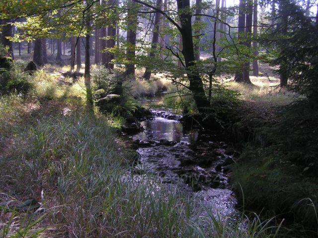 Na podzim v lese
