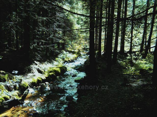 Hamerský potok u Sirného pramene
