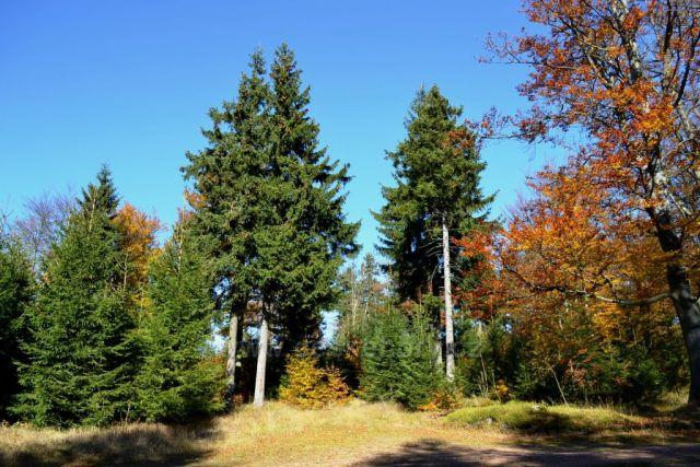 Podzimní Moldava