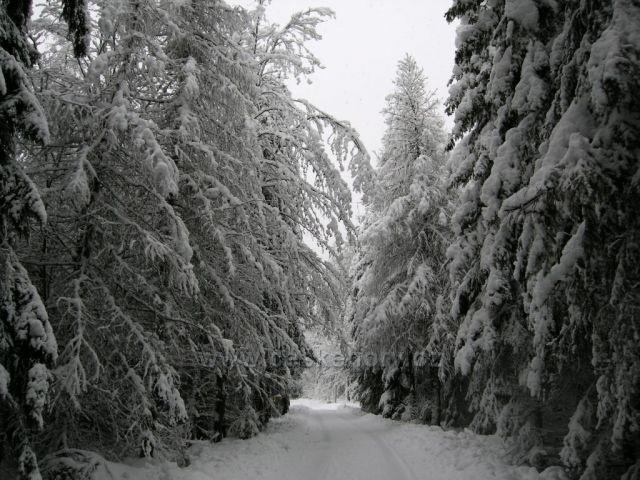bílý les