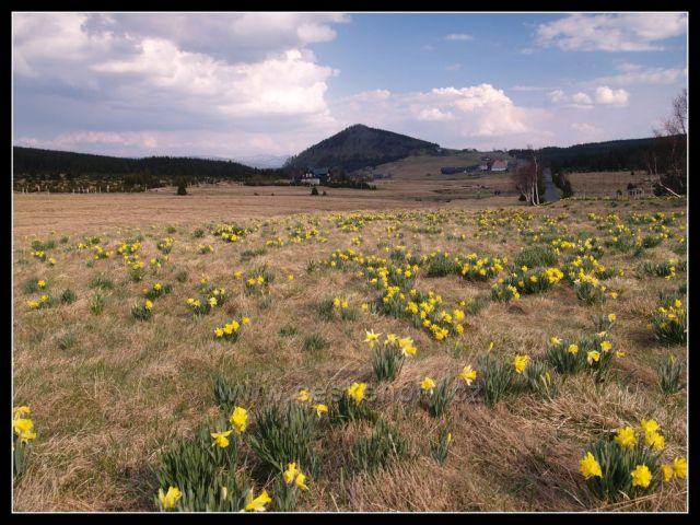 jaro pod Bukovcem