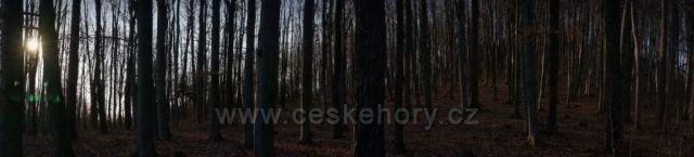 zima končí v lese