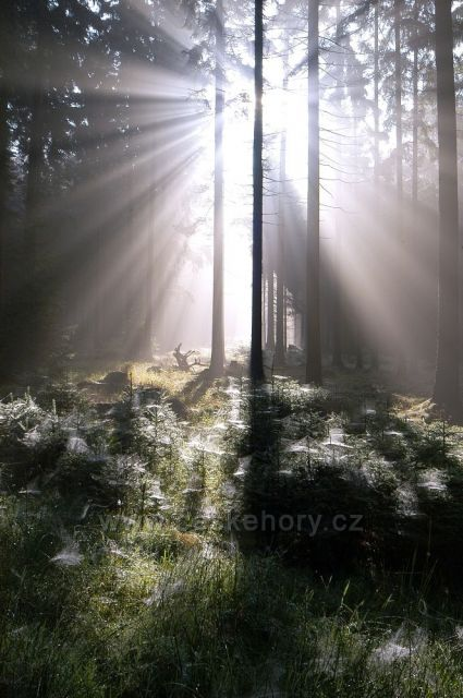 Žďárské vrchy,lesy pod Žákovou horou
