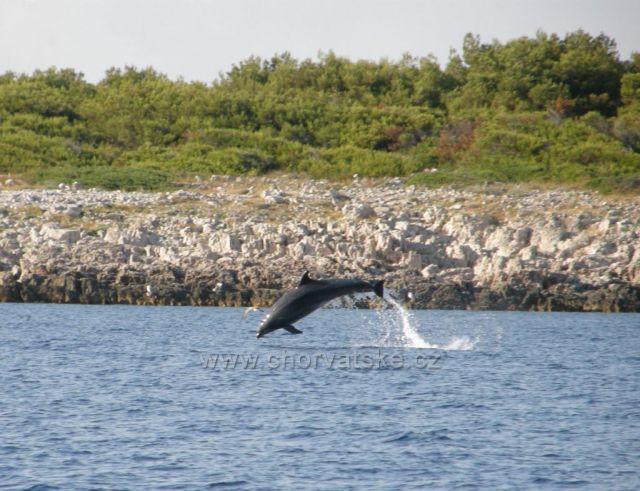 Skákající delfín