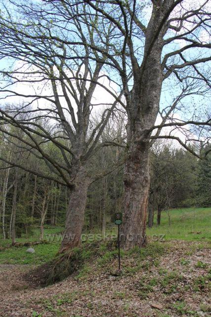 Skupina památných stromů na Stezce strážců hranice