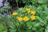 Flora v Kašperských Horách