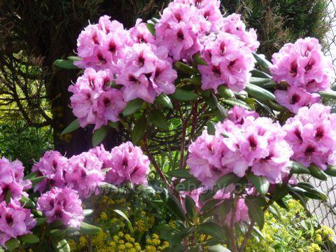 Jaro v růžové barvě...