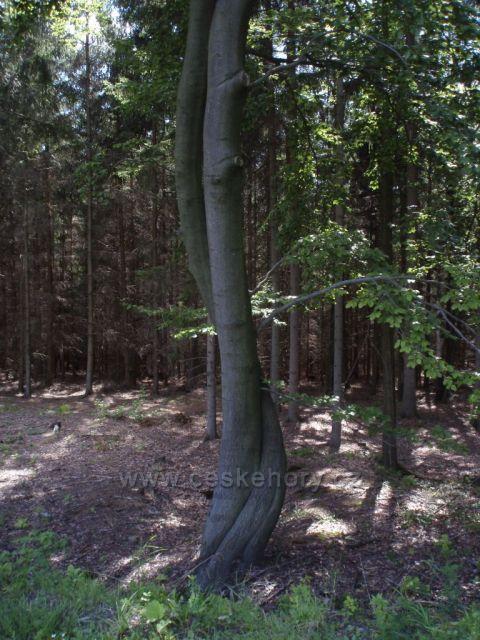 objetí stromu