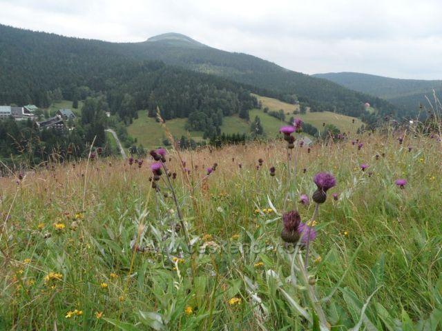 rozkvetlá sjezdovka Harrachov-Čertova hora
