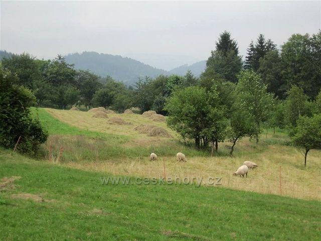 Beskydy (cestou z Hutiska na Díly)