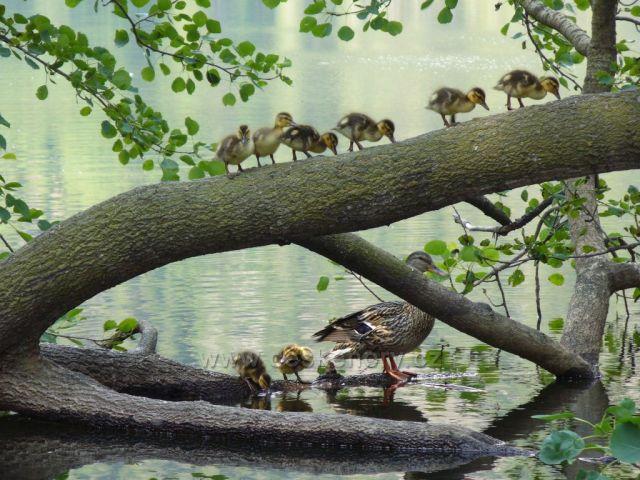 Rodinka na Černém jezeře