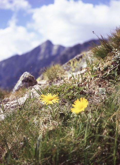 Kvety pod Kriváňom