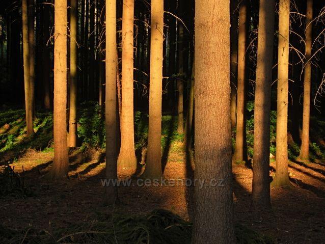 u nás v lese
