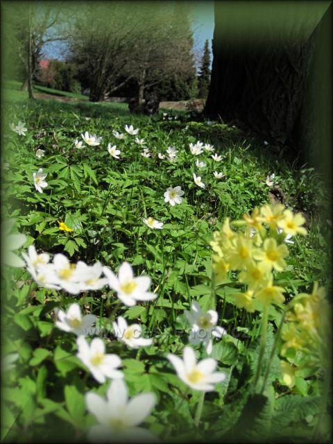 krásné jaro v Bačetíně