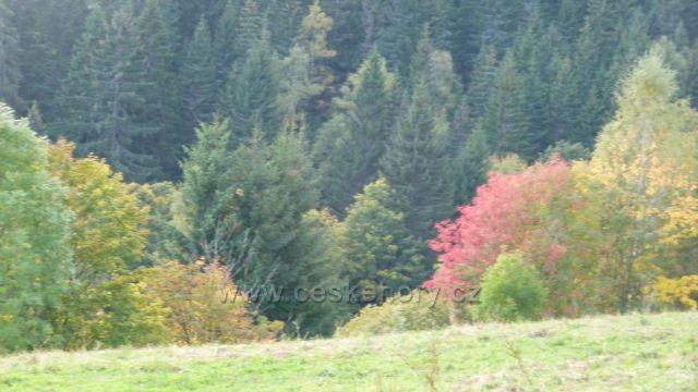 pohled na  zbarvene stromy