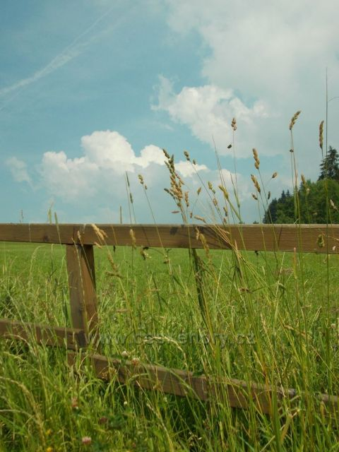 v travě
