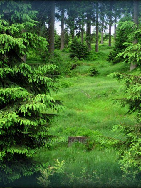 Bukačka /chráněná oblast/ Orlické hory